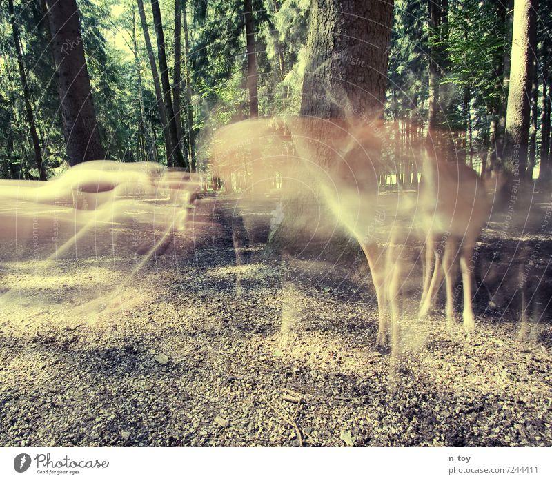 Versuchung Natur Sommer ruhig Tier Wald Freiheit Gefühle Landschaft Glück Ausflug wandern Sicherheit Wildtier Neugier Vertrauen entdecken