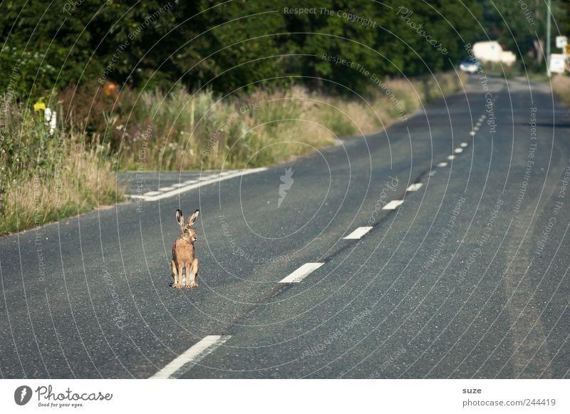 Straßenjunge Natur Tier Umwelt Wege & Pfade grau klein außergewöhnlich Verkehr sitzen Wildtier warten bedrohlich niedlich Neugier Asphalt