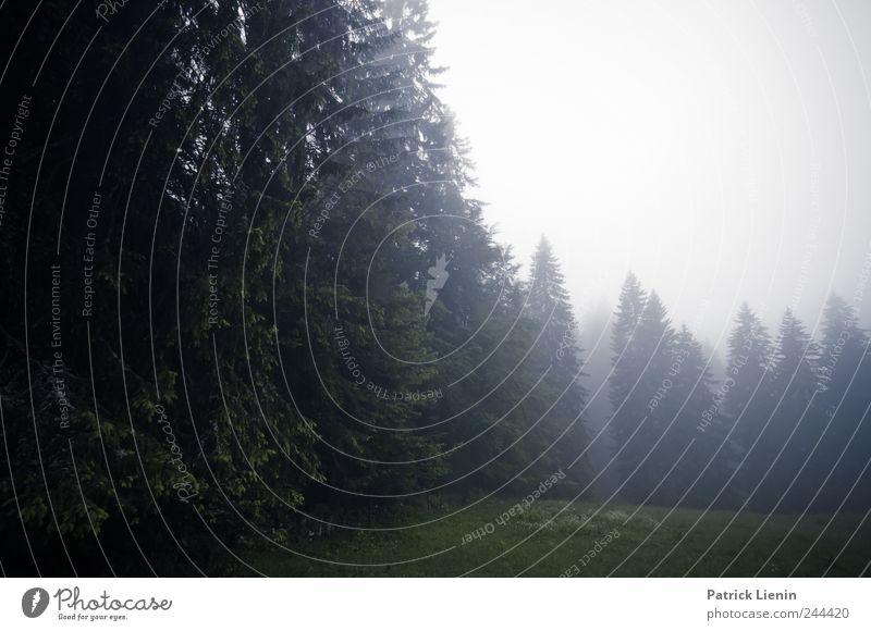 Fade to grey Freizeit & Hobby Ferien & Urlaub & Reisen Tourismus Ausflug Ferne Freiheit Berge u. Gebirge wandern Umwelt Natur Landschaft Pflanze Urelemente Luft