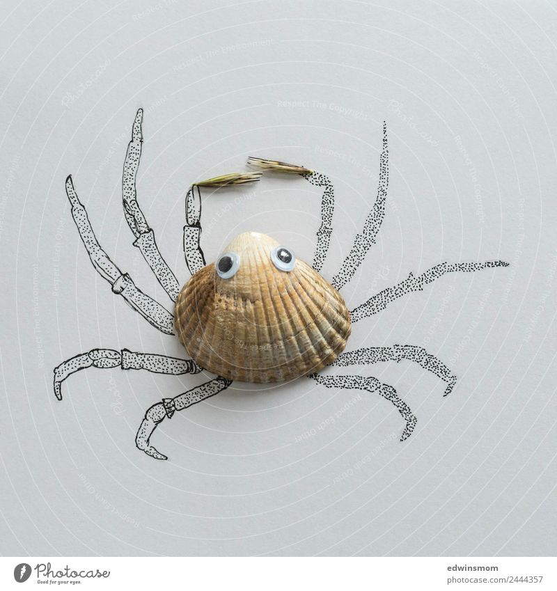 Small crab Freizeit & Hobby Basteln zeichnen Strand Natur Sommer Meer Tier Wildtier Muschel Krebstier 1 Blick warten fest klein nah natürlich niedlich grau Idee