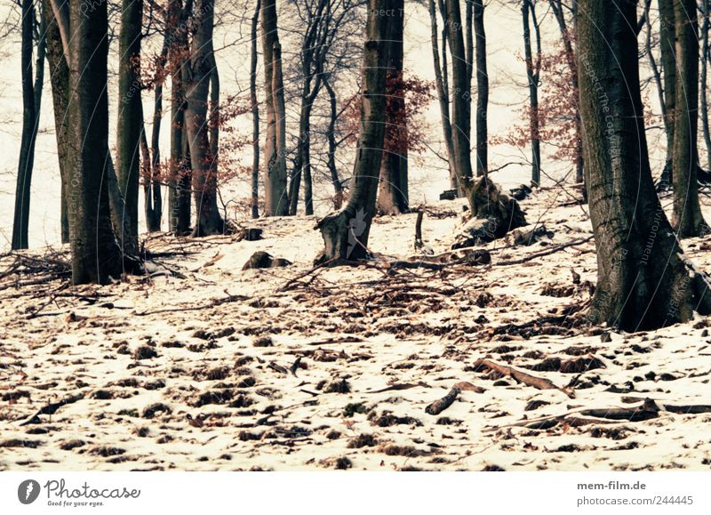 winterwald Wald Winter Schnee Buche Mischwald Hügel braun weiß Baumstamm Brennholz Waldboden