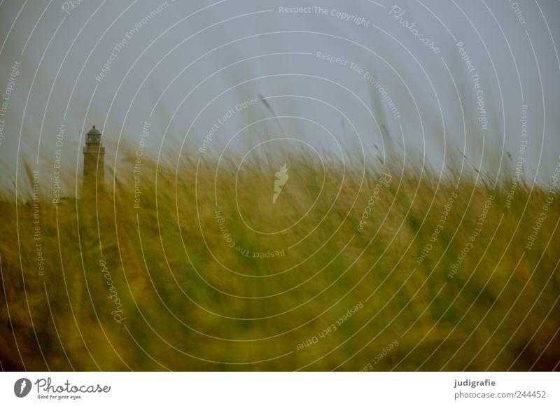 Leuchtturm Himmel Natur Pflanze Ferien & Urlaub & Reisen Umwelt Landschaft Gras Küste Stimmung natürlich wild weich Idylle Ostsee Darß
