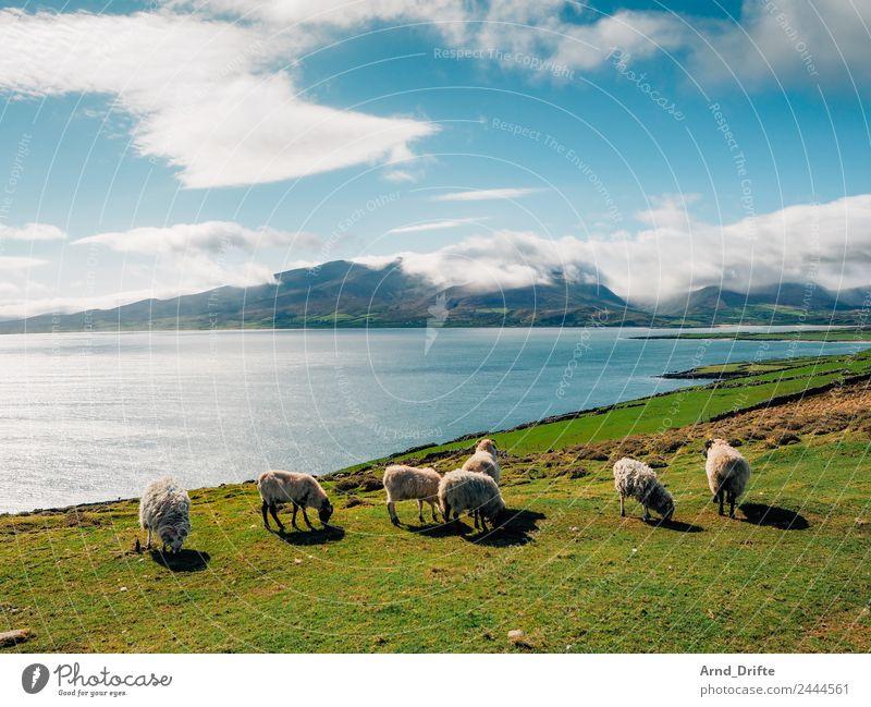 Irland - Brandon Point Himmel Ferien & Urlaub & Reisen Natur Sommer Pflanze Landschaft Meer Wolken Tier Ferne Berge u. Gebirge Frühling Wiese Küste Ausflug Feld