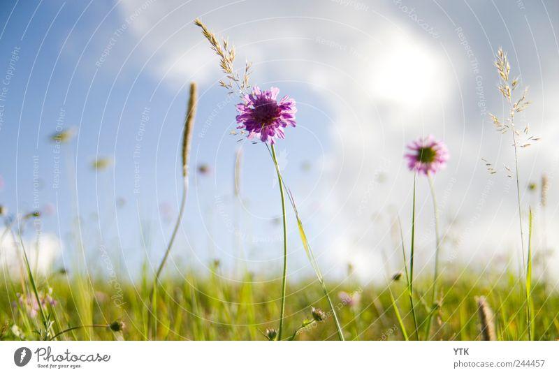 You'll find beauty in every place Himmel Natur grün Pflanze Sommer Blume Blatt Wolken Wiese Umwelt Landschaft Gras Bewegung Blüte hell Wind