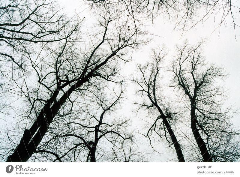 Ein paar Bäume weiß Baum Winter schwarz Wald kalt grau Vogel Nebel Ast aufwärts Baumstamm