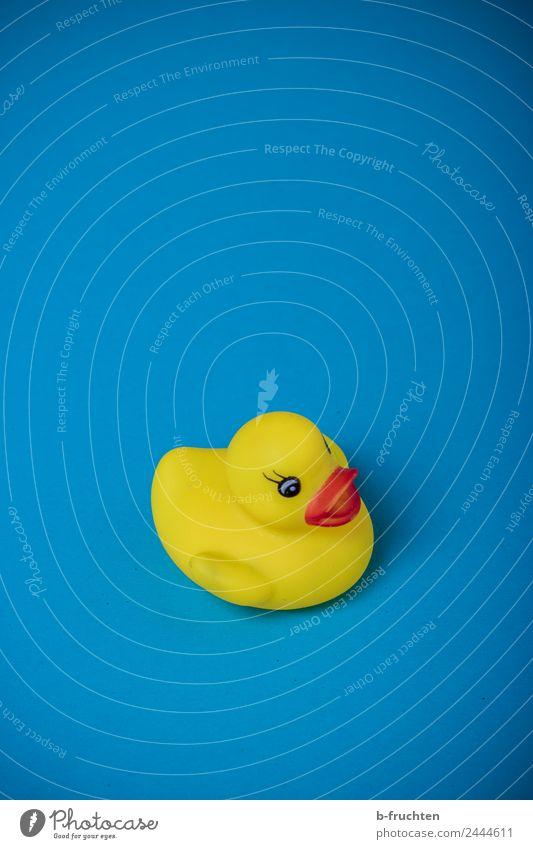 Schöne Ferien Spielzeug Schwimmen & Baden Coolness Fröhlichkeit frisch trendy maritim blau gelb Freude Erholung Lebensfreude Ferien & Urlaub & Reisen Badeente