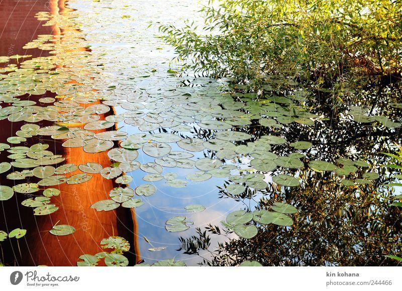 833 meter Himmel Ferien & Urlaub & Reisen blau Sommer Wasser Baum rot Blatt Wolken gelb Küste gold genießen Ausflug Brücke Flussufer