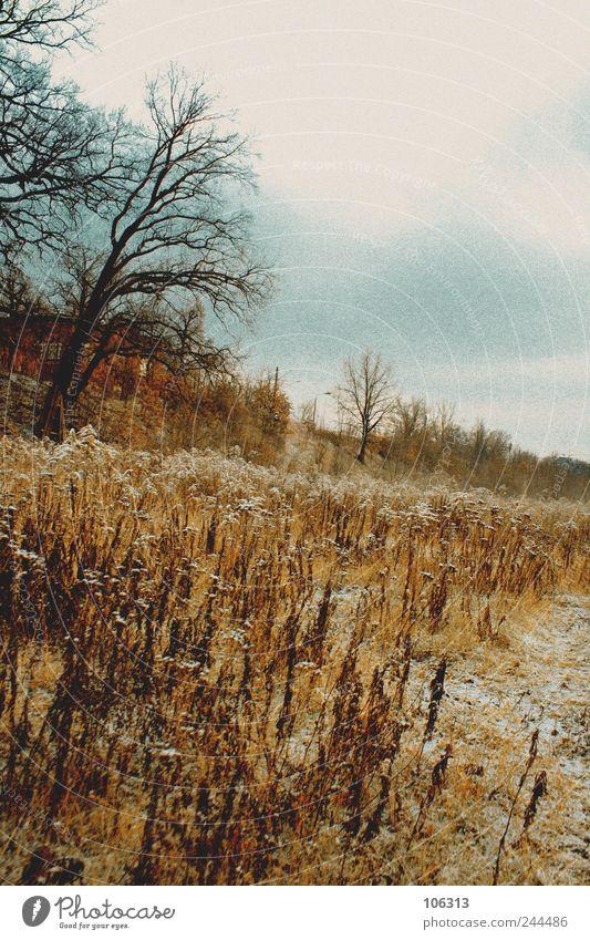 202723 Himmel Natur Baum Einsamkeit ruhig Ferne Landschaft Tod kalt Gefühle Eis Feld Frost Romantik Idylle gefroren