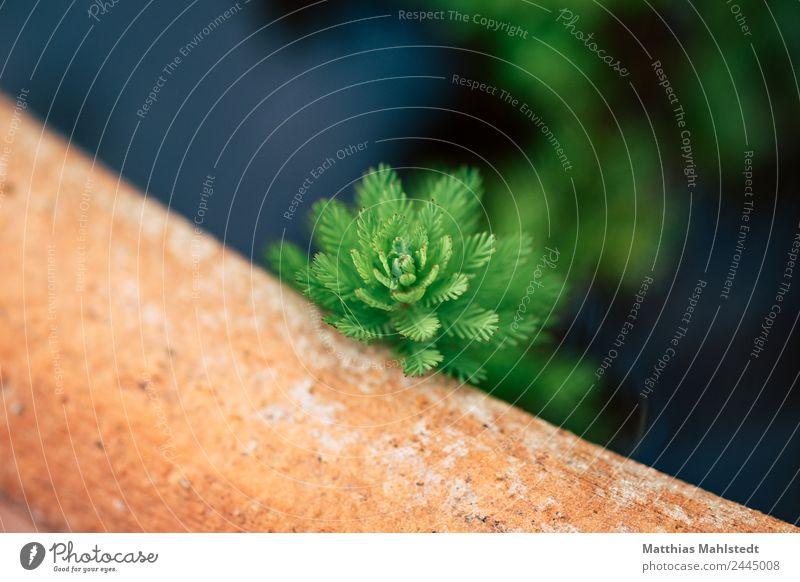 Wasserpflanze Umwelt Natur Pflanze Grünpflanze nachhaltig natürlich grün orange Wachstum Farbfoto Gedeckte Farben Außenaufnahme Detailaufnahme Menschenleer
