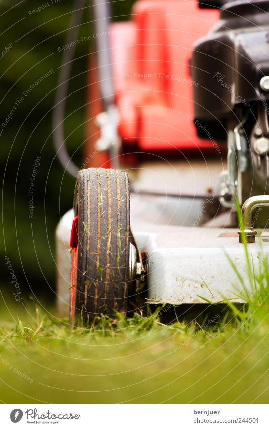 famous last words Pflanze Sommer Ferne Gras Garten Park Angst Rasen Rad Maschine Halm Motor Rasenmäher Schwache Tiefenschärfe Arbeit & Erwerbstätigkeit rasenmähen
