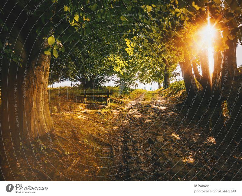 alte wege Umwelt Schönes Wetter Wald Wege & Pfade Bank Baumstamm Pflastersteine Fußweg Romantik ruhig Farbfoto Außenaufnahme Tag Licht Kontrast Silhouette