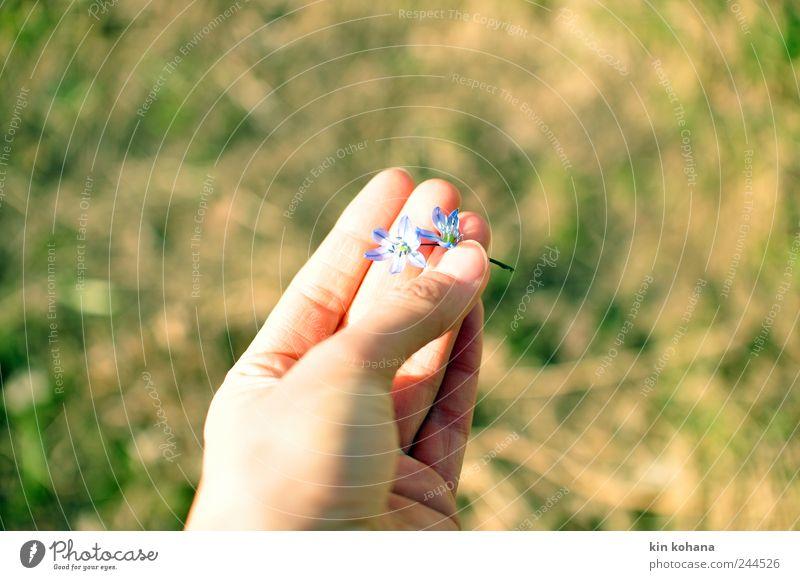 in deiner hand Frau Hand blau Sommer feminin Blüte Frühling träumen Erwachsene Finger Hoffnung Vergänglichkeit beobachten Sehnsucht festhalten Blühend