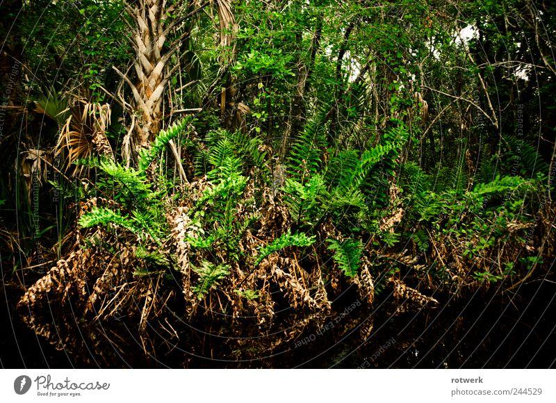 Schwarzspiegel Natur Pflanze grün Wasser Baum Wald Sträucher entdecken Flussufer exotisch Urwald Expedition Grünpflanze Farn Sumpf Wildpflanze