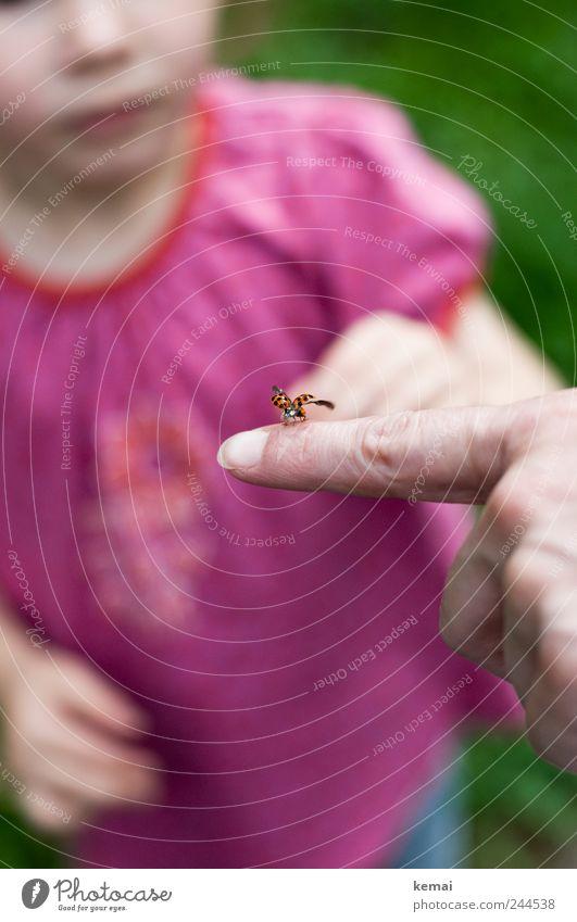 Fauna live und in Farbe Mensch Kind Finger Zeigefinger Fingernagel Tier Wildtier Flügel Marienkäfer Insekt 1 fliegen sitzen rosa abfliegen starten zeigen