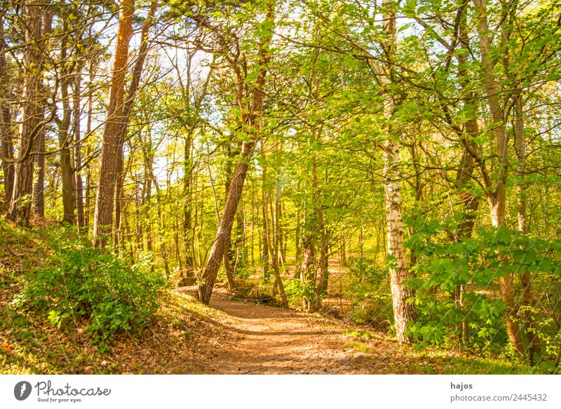 Wald im Frühling Erholung Natur Wärme Baum springen weich Idylle grün frisch saftig jung jahreszeit bäume sonnig hell leuchtend strahl natu weg waldweg