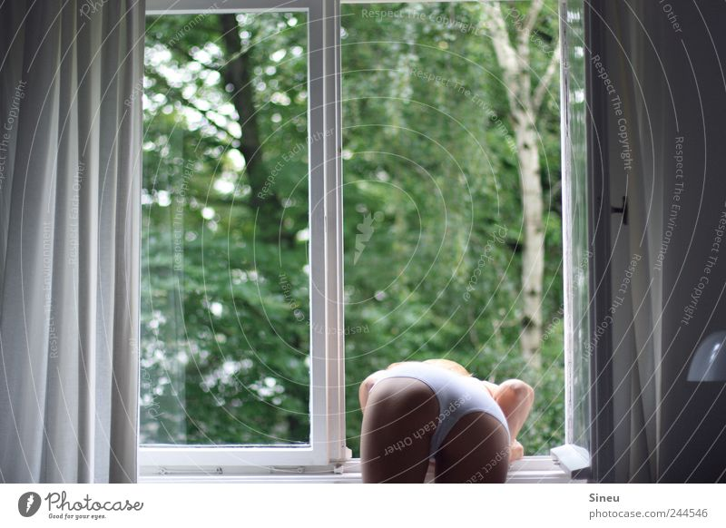 Fenster mit Frau Schlafzimmer Gardine Lampe Lampenschirm feminin Erwachsene Gesäß Beine 1 Mensch Schönes Wetter Baum Birke Unterwäsche beobachten stehen warten