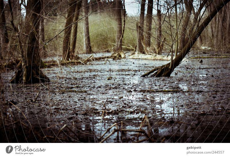 Dauerregen Umwelt Natur Landschaft Tier Urelemente Erde Klima Wetter Regen Pflanze Baum Sträucher Wald Urwald Moor Sumpf Auwald Hochwasser Polder nass natürlich
