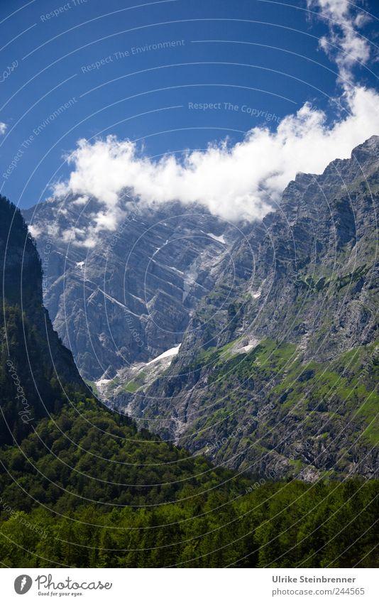 Watzmann Ostwand Himmel Natur Baum Sommer Wolken Einsamkeit Umwelt Berge u. Gebirge Landschaft Felsen hoch Tourismus ästhetisch gefährlich Sträucher bedrohlich