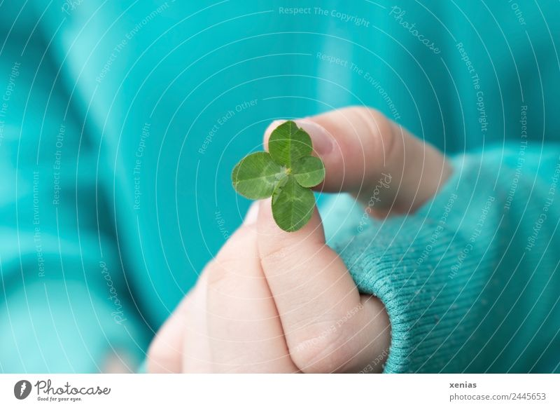 junge Hand in türkisfarbener Jacke hält vierblättriges Kleeblatt Finger Daumen Frühling Sommer Pflanze Blatt Pullover festhalten Glück grün 4 Glücksbringer