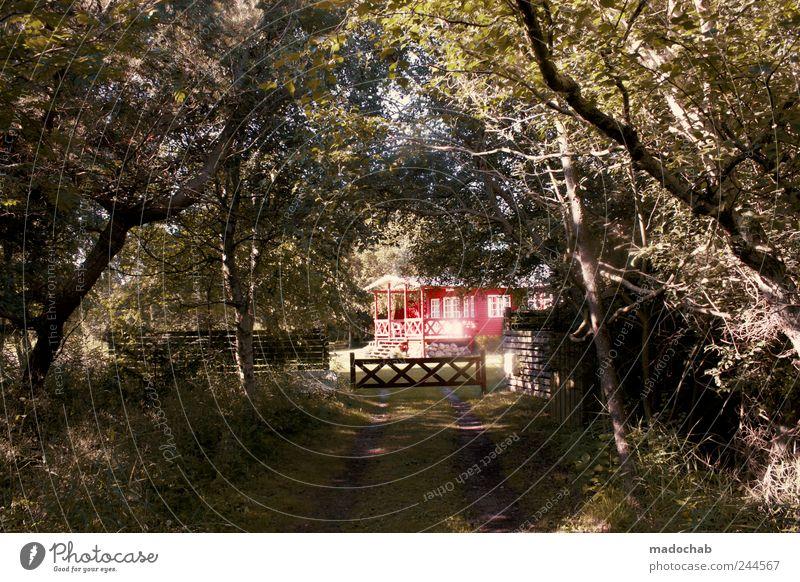 Der Weg ins Licht Natur Sommer Ferien & Urlaub & Reisen ruhig Haus Wald Erholung Landschaft Garten Zufriedenheit glänzend Tourismus ästhetisch Lifestyle