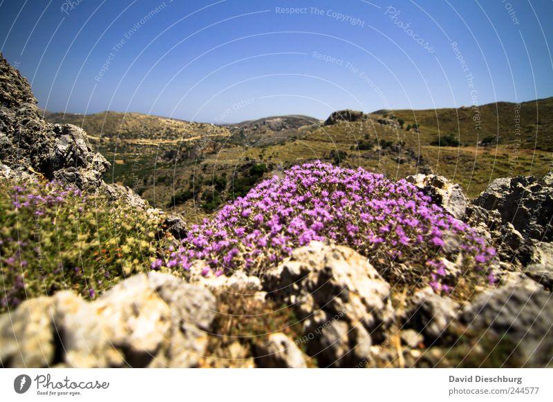 Auf 1103m über N/N Ferien & Urlaub & Reisen Ausflug Ferne Freiheit Sommerurlaub Natur Landschaft Pflanze Wolkenloser Himmel Schönes Wetter Blume Sträucher Blüte