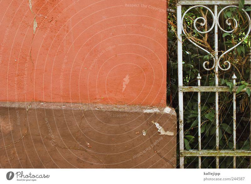 lustgarten Pflanze Wand Herz Zaun Barriere antik Gartenzaun