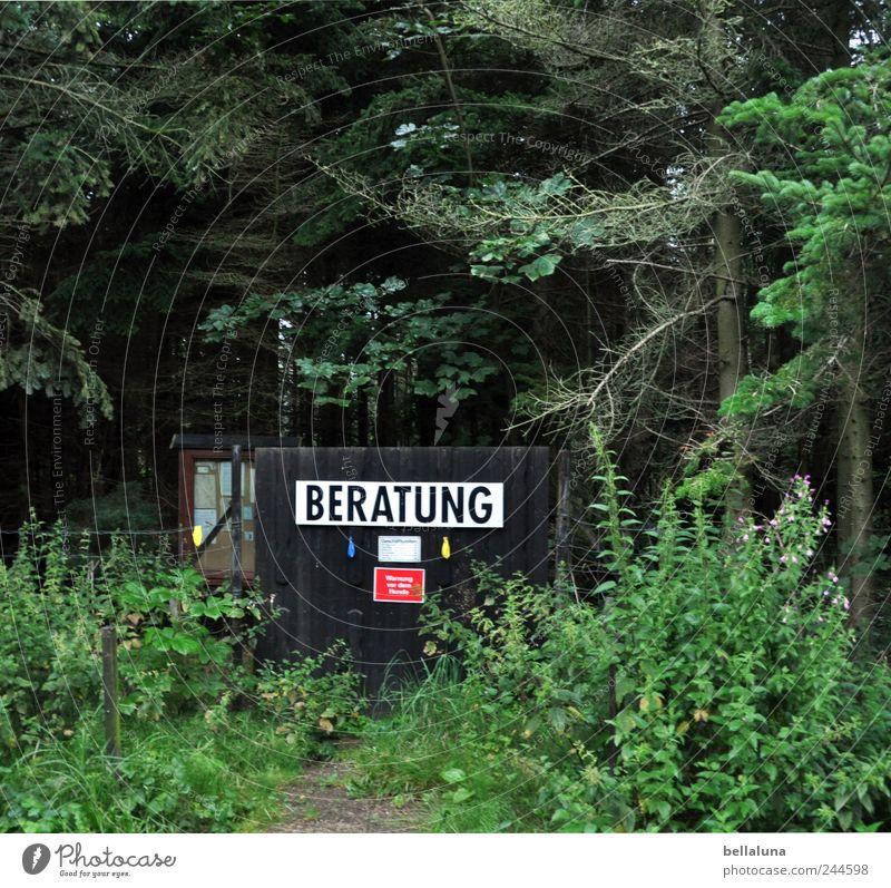 Beratung Natur Pflanze Erde Schönes Wetter Baum Gras Sträucher Grünpflanze Wildpflanze Wald dunkel hell Nadelwald Warnschild Schilder & Markierungen Verbote