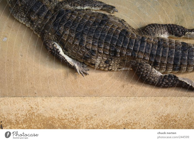 moving out Einsamkeit Tier Erholung Zoo Wildtier Krallen Krokodil