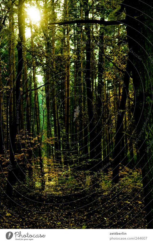 Wald Natur Pflanze Sommer Ferien & Urlaub & Reisen dunkel Freiheit Umwelt Landschaft Park Wetter Freizeit & Hobby Erde Ausflug Tourismus Klima
