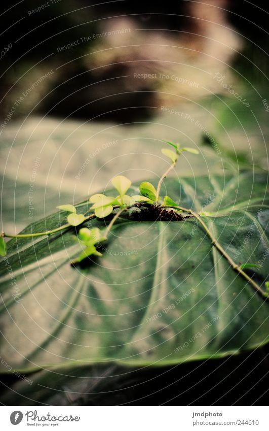 Nutzpflanze Natur grün Pflanze Blume Blatt Umwelt Landschaft Garten Park frisch natürlich Wachstum Gelassenheit Moos exotisch saftig