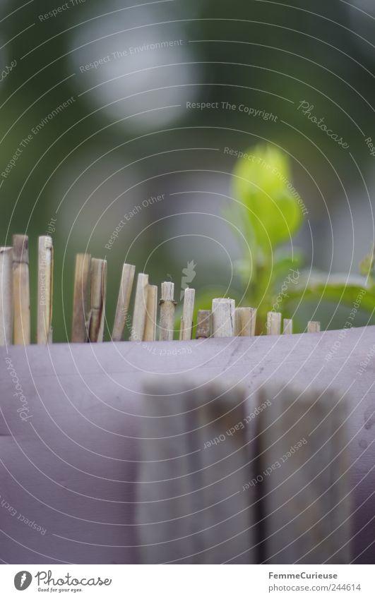 Am Gartenzaun, mit Zwischenraum, hindurchzuschaun. Freizeit & Hobby Ausflug Gartenarbeit Landwirtschaft Forstwirtschaft Ruhestand Feierabend Umwelt Natur