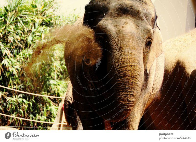 trööö Natur Freude Ferien & Urlaub & Reisen Tier Glück Sand Kraft Umwelt dreckig Ausflug Fröhlichkeit wild Zoo Wildtier dick Freundlichkeit