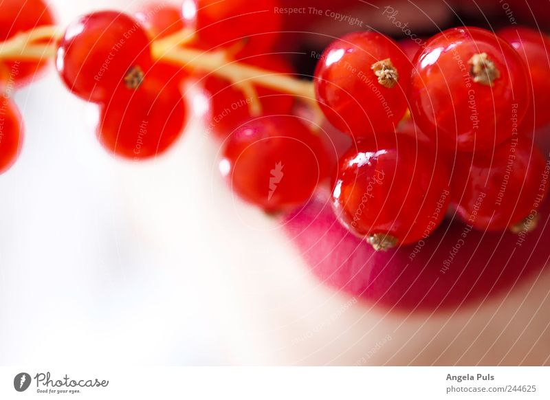 Jo, ich habe Dich zum Fressen gern weiß rot Frucht Lebensmittel Lippen füttern Johannisbeeren