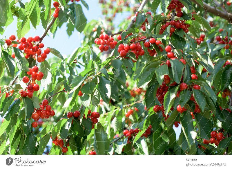 Natur Sommer Pflanze Farbe schön grün Landschaft Baum rot Blatt Essen Garten Frucht Wachstum frisch Klima
