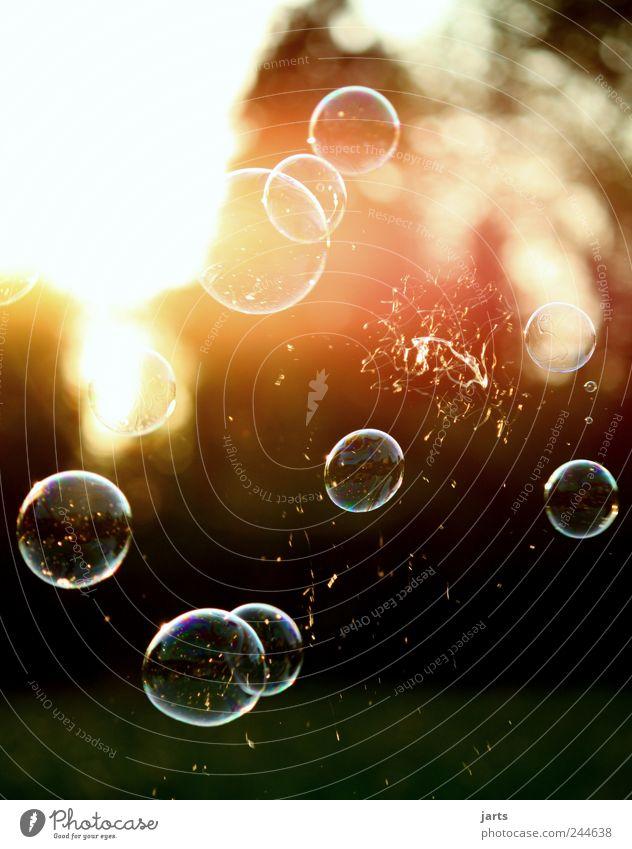 ..wenn Träume platzen... Spielen fliegen frei Hoffnung Freiheit Leben Schweben Seifenblase Farbfoto Außenaufnahme Detailaufnahme Menschenleer Textfreiraum oben