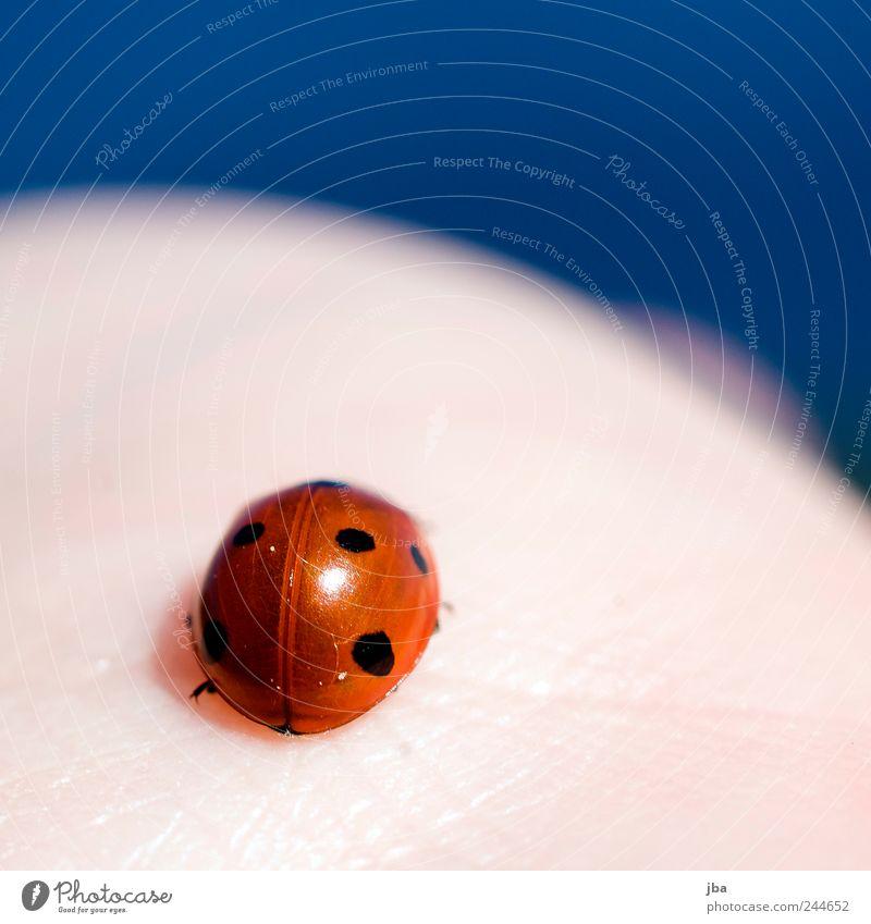 Marienkäfer Natur Wasser rot Ferien & Urlaub & Reisen Tier Frühling klein Haut Zufriedenheit ästhetisch rund nah natürlich Wildtier niedlich Marienkäfer