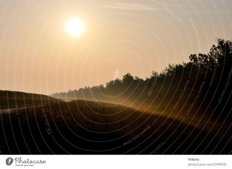 Sonnenaufgang Sommer Sommerurlaub Natur Landschaft Pflanze Himmel Sonnenuntergang Sonnenlicht Schönes Wetter Nebel Gras Wiese Wald Straße Wege & Pfade schön