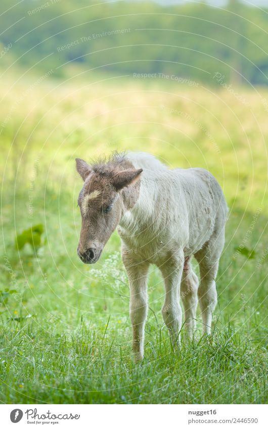 Fohlen II Umwelt Landschaft Tier Sonne Frühling Sommer Herbst Klima Schönes Wetter Gras Sträucher Garten Park Wiese Feld Haustier Nutztier Pferd Tiergesicht