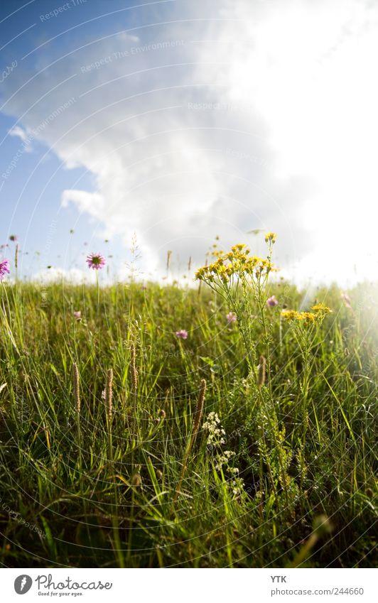 You'll find beauty in every place Pt. II Natur Himmel Sonne grün Pflanze Blume Sommer ruhig Wolken Wiese Gras Landschaft Park Umwelt Wetter gold