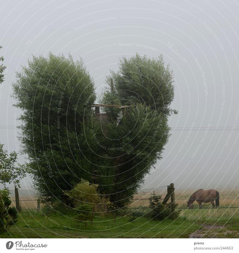 Herz für Bäume Umwelt Natur Landschaft Pflanze Tier Wetter Baum Wiese Feld Nutztier Pferd 1 grau grün Weide herzförmig Zaun Baumhaus Farbfoto Außenaufnahme