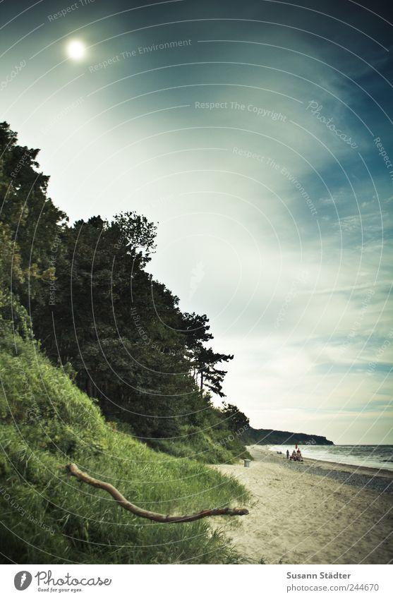 with true Baum Sonne Sommer Strand Meer Einsamkeit Wald dunkel Wiese Sand See Küste Wellen Wind Erde bedrohlich