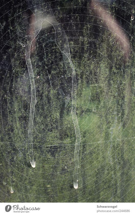 mimimi Wasser grün Pflanze Gefühle Wassertropfen Trauer natürlich Spuren Tränen Erfahrung Frustration trocknen Grünpflanze Glasscheibe Menschlichkeit Verbitterung