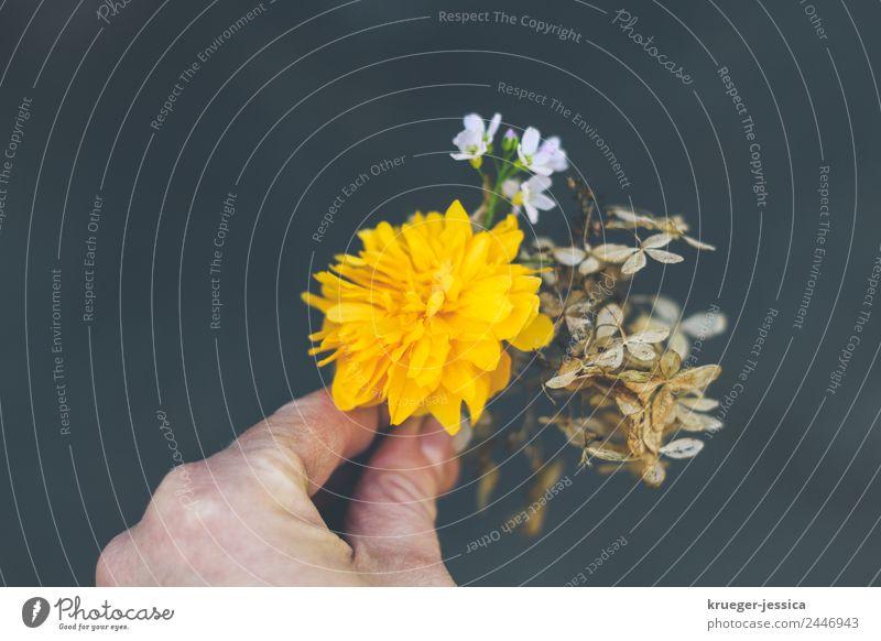 onebouquetperday Pflanze Blume Hortensie Wiesen-Schaumkraut Stimmung Glück achtsam Gelassenheit Farbfoto