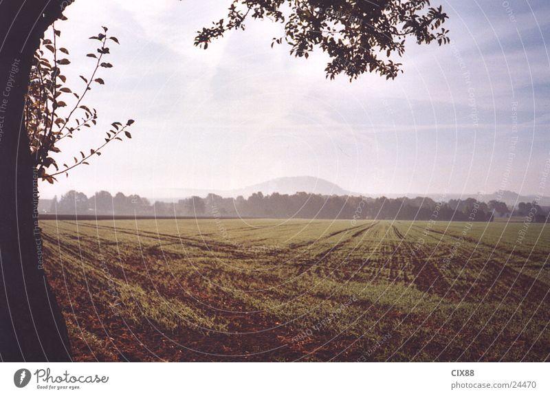 Morgennebel 2 Himmel Baum Einsamkeit Straße Feld Nebel Amerika