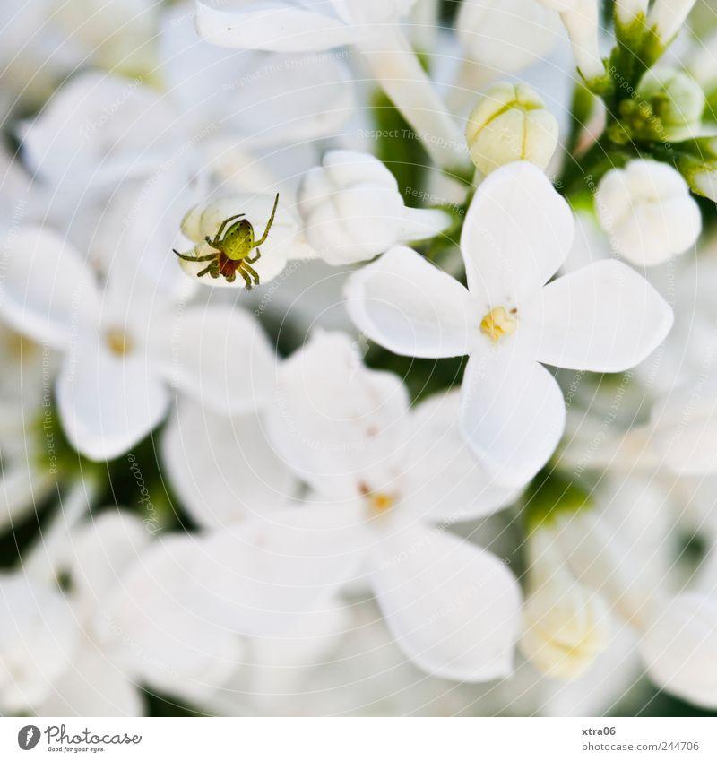 kleine spinne Baum Pflanze Blume Tier Spinne krabbeln