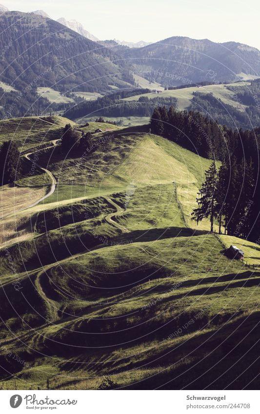 Zaubahland Natur grün Baum Pflanze Ferien & Urlaub & Reisen Ferne Wald Erholung Leben Wiese Freiheit Umwelt Berge u. Gebirge Landschaft Gras Bewegung