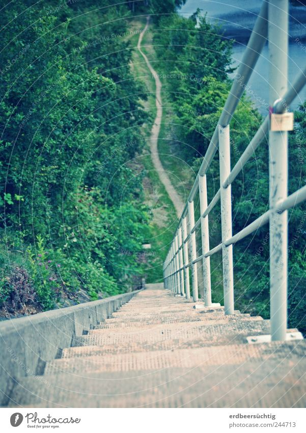Der Abstieg Natur Wasser Pflanze Sommer Landschaft natürlich Beton hoch wandern Treppe Sträucher bedrohlich Fluss fallen Geländer Flussufer