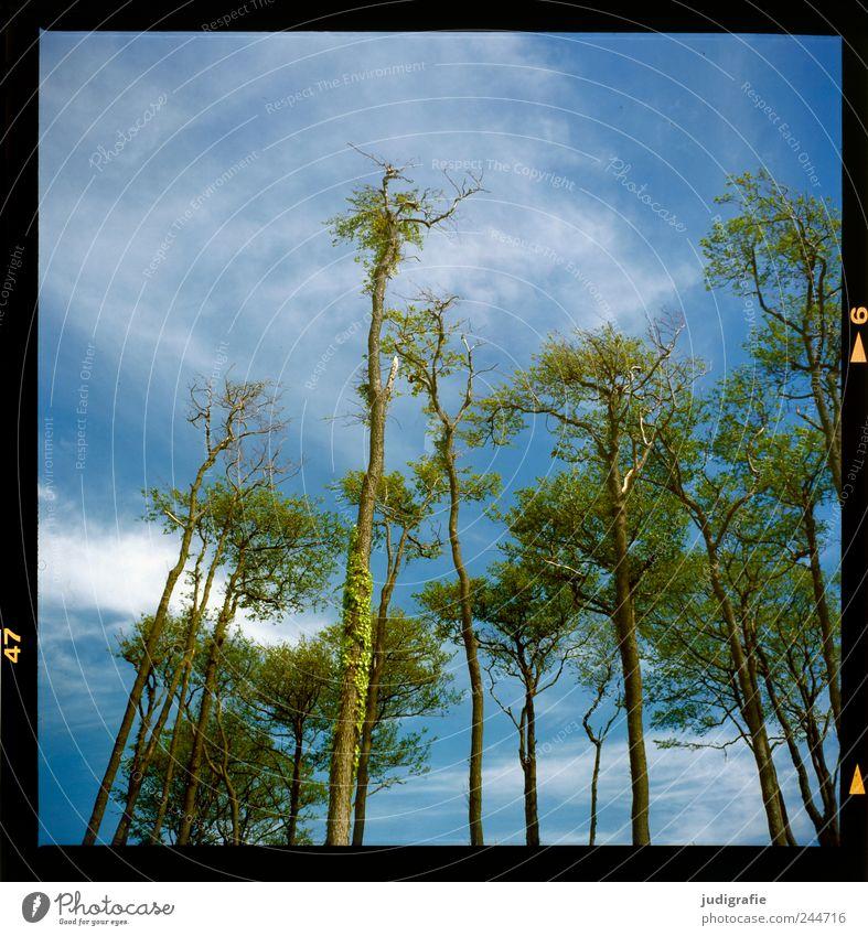 Weststrand Umwelt Landschaft Pflanze Himmel Wolken Sommer Klima Schönes Wetter Baum Wald Küste Ostsee Darß Wachstum frisch groß hoch natürlich wild Farbfoto