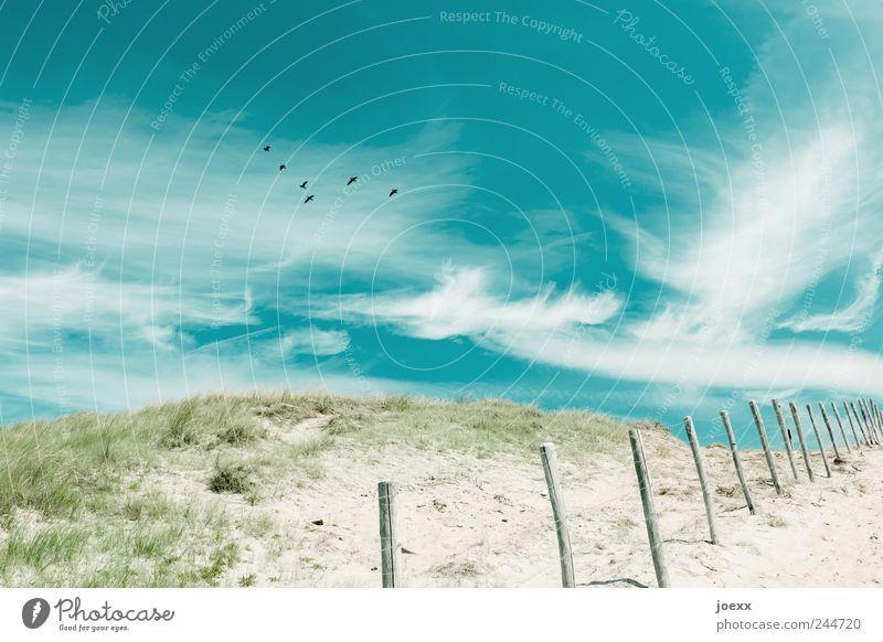 Frei Natur Himmel grün blau Wolken Freiheit grau Sand Küste Vogel fliegen Tiergruppe Hügel Zaun Schönes Wetter Grünpflanze