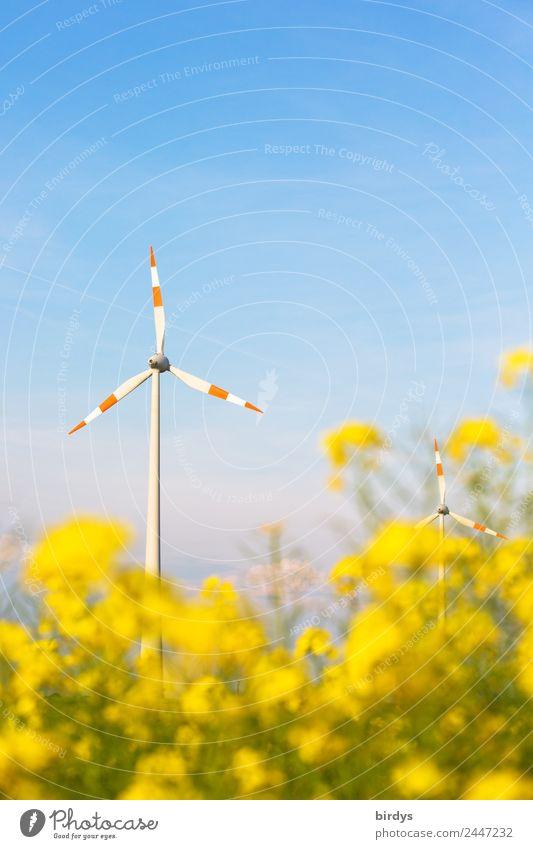 Windenergie regenerativ Energiewirtschaft Erneuerbare Energie Windkraftanlage Wolkenloser Himmel Frühling Sommer Schönes Wetter Nutzpflanze Rapsblüte Rapsfeld